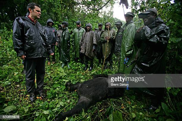 Emmanuel De Merode director of conservation group Wildlife Direct stands with Congolese Conservation Rangers over the body of a murdered female...