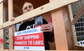 EmmyAward winning actor James Cromwell steps into a cage joining PETA protesters holding placards and shouting slogans in front of the Air France...
