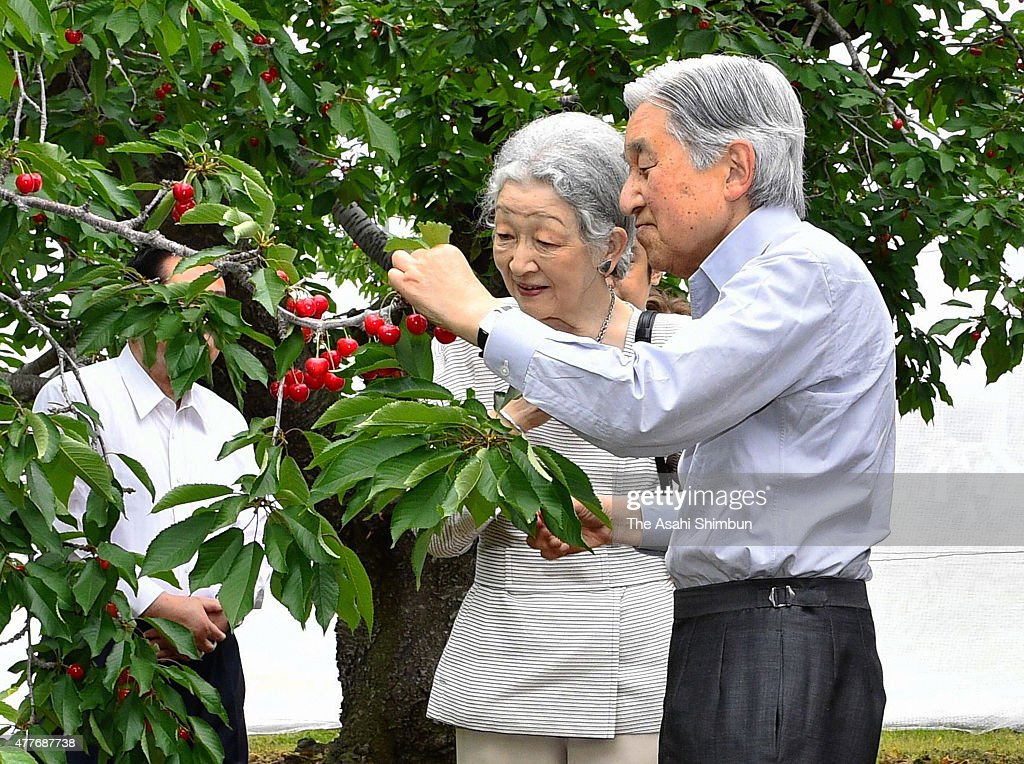 Emperor Akihito and Empress Michiko harvest cherries at the Tenko-en orchard to harvest cherries on June 18, 2015 in Higashine, Yamagata, Japan.