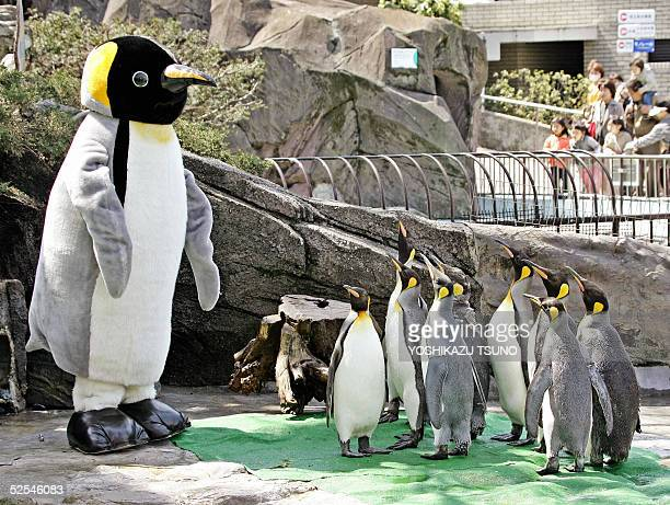 Emperor penguins give attention to a heavyweight penguin as big as human adult purpoted by zoo director Teruyuki Komiya at the penguin cage of...