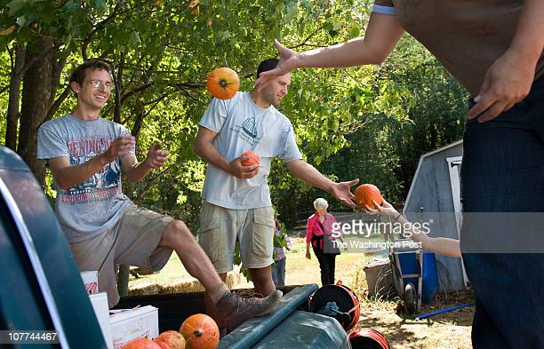 Employee Anjela Barnes tosses squash to apprentice farmers Chris Ryan and Rob Norris 28 at the Ecosystem Farm a USDA certified organic farm in...