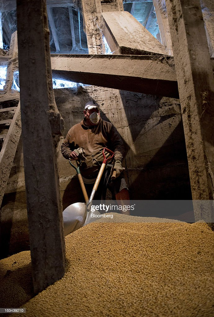 Employee Ben Strader stands amongst soybeans shoveled from a jammed conveyor belt in the basement area of a grain elevator at Atherton Grain Co. Inc. in Normandy, Illinois, U.S., on Wednesday, Oct. 3, 2012. Soybeans climbed for a third day as U.S. export sales jumped, boosted by purchases from China. Photographer: Daniel Acker/Bloomberg via Getty Images