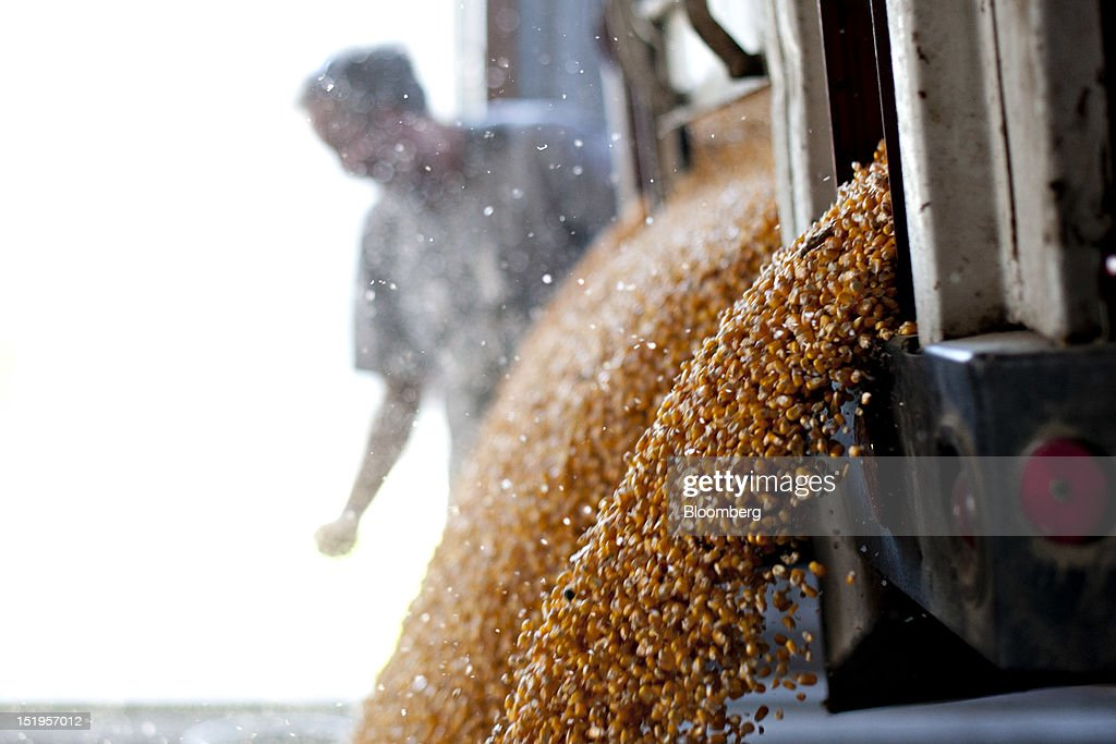 Employee Phil Swanson looks on as corn is dumped from a dump truck at the Atherton Grain Co. Inc. elevator in Normandy, Illinois, U.S., on Wednesday, Sept. 12, 2012. The U.S. Department of Agriculture estimates for world agricultural supply and demand is bearish for corn, wheat and cotton and bullish for soybeans, according to Goldman Sachs Group Inc. Photographer: Daniel Acker/Bloomberg via Getty ImagesPhil Swanson