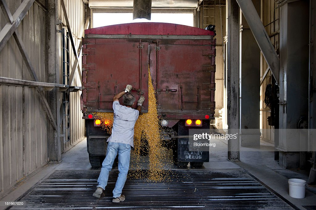 Employee Phil Swanson opens the tailgate of a dump truck making a delivery of corn at the Atherton Grain Co. Inc. elevator in Normandy, Illinois, U.S., on Wednesday, Sept. 12, 2012. The U.S. Department of Agriculture estimates for world agricultural supply and demand is bearish for corn, wheat and cotton and bullish for soybeans, according to Goldman Sachs Group Inc. Photographer: Daniel Acker/Bloomberg via Getty ImagesPhil Swanson