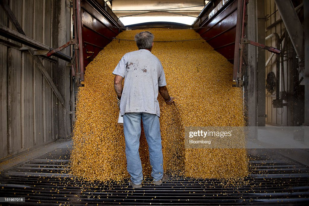 Employee Phil Swanson takes a sample of corn for moisture testing as it is unloaded at the Atherton Grain Co. Inc. elevator in Normandy, Illinois, U.S., on Wednesday, Sept. 12, 2012. The U.S. Department of Agriculture estimates for world agricultural supply and demand is bearish for corn, wheat and cotton and bullish for soybeans, according to Goldman Sachs Group Inc. Photographer: Daniel Acker/Bloomberg via Getty ImagesPhil Swanson