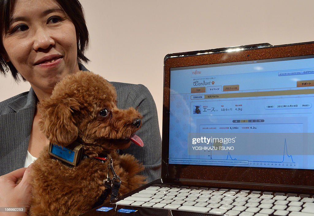 Employee Yoko Mitsuyama of Japan's computer maker Fujitsu holds her dog 'Ace' who is wearing the company's 'Wandant', a device developed to maintain a dog's health, at a press conference in Tokyo on November 27, 2012. The device records a dog's activity level and other data such as number of steps taken, signs of shivering and external temperature which pet owners can access via a cloud service on their smartphones or personal computers to provide to health care services, pharmaceutical and insurance companies. AFP PHOTO / Yoshikazu TSUNO