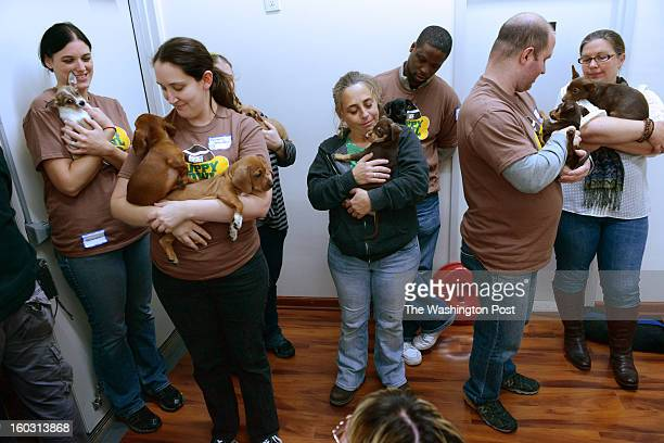 **Embargoed til 2/5/2013** NEW YORK CITY NY NOVEMBER 11 Employees and volunteers coddle adoptable puppies backstage that are about to be taped in...