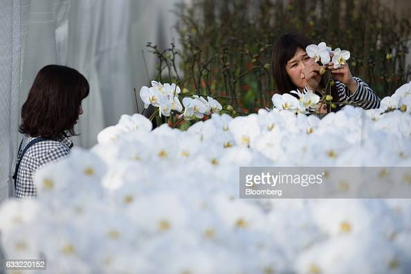 Employees attend to orchids in a greenhouse at Ushimura Orchid Farm a supplier to ArtGreen Co in Ebina City Kanagawa Prefecture Japan on Friday Jan 6...