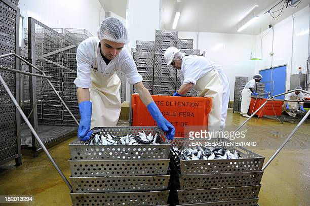 Employees carry fresh sardines on September 25 2013 in Quiberon western France at the canning factory 'La Belle Iloise' The company employs 200...