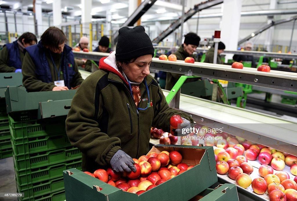 Employees check apples at a production chain in Polish fruit factory Roja in Regnow, Poland on April 26, 2014. Thanks to around 40 billion euros ($55 billion) of EU funding already received and another 42.4 billion in the pipeline for 2014-2020, Polish agriculture is racing ahead with updates and bringing change to the landscape.