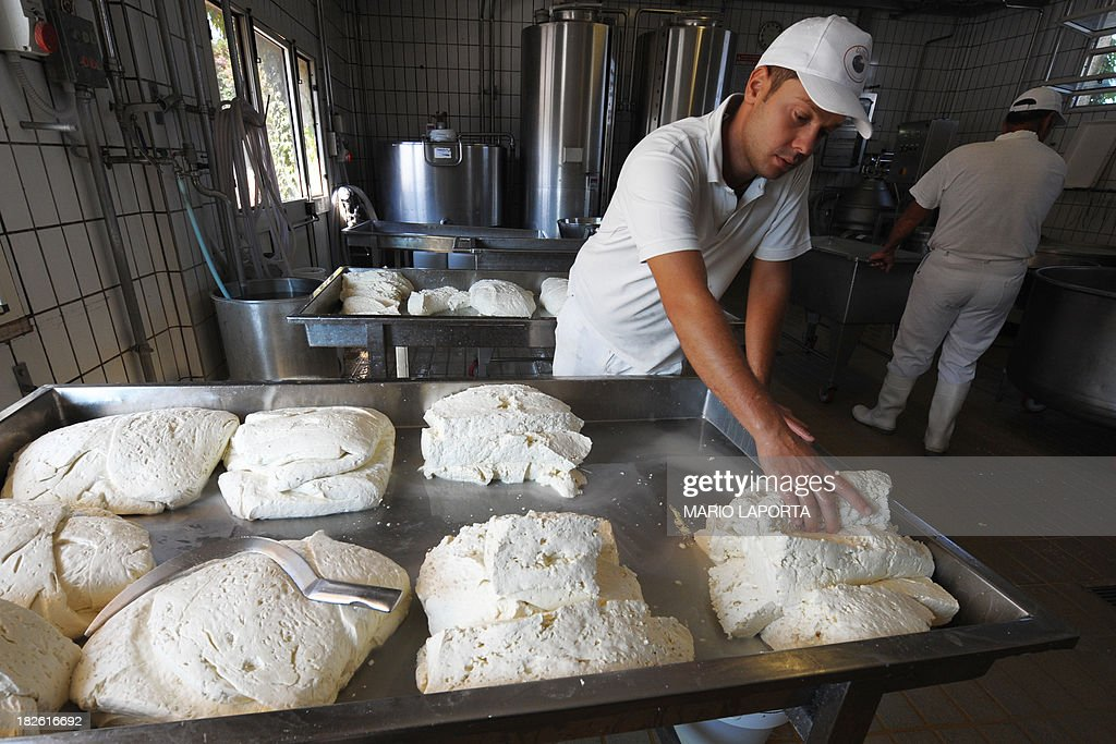 Employees make buffalo mozzarella at the Tenuta Vannulo dairy farm in Capaccio on September 3, 2013. A queue forms for rub-downs as jazz piano tinkles out of the speakers: some of the best buffalo mozzarella in the world starts with in-stable VIP treatment. The half-tonne black water buffaloes spend their days lounging on rubber mattresses, munching on organic hay or looking forward to vaporised showers that form a fine cooling mist from overhead pipes.