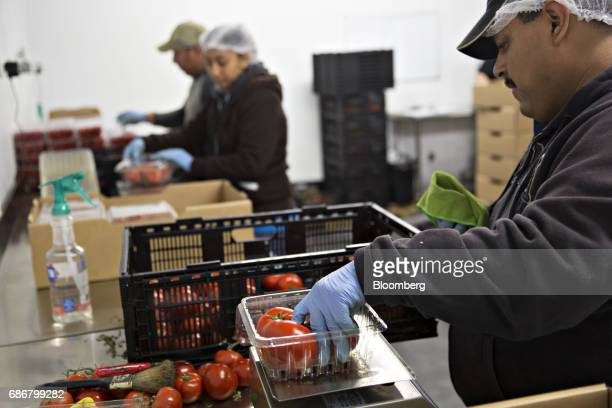 Employees package tomatoes at the BrightFarms Inc Chicagoland greenhouse in Rochelle Illinois US on Friday May 12 2017 The BrightFarms Chicagoland...