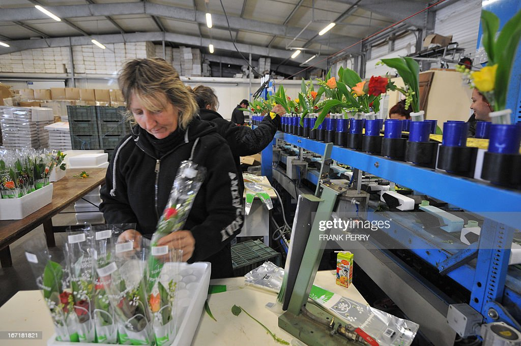 Employees prepare sprigs of lily-of-the-valley on April 22, 2013 at the Louis Douineau factory in the western French city of Saint-Julien de Concelles, near Nantes.