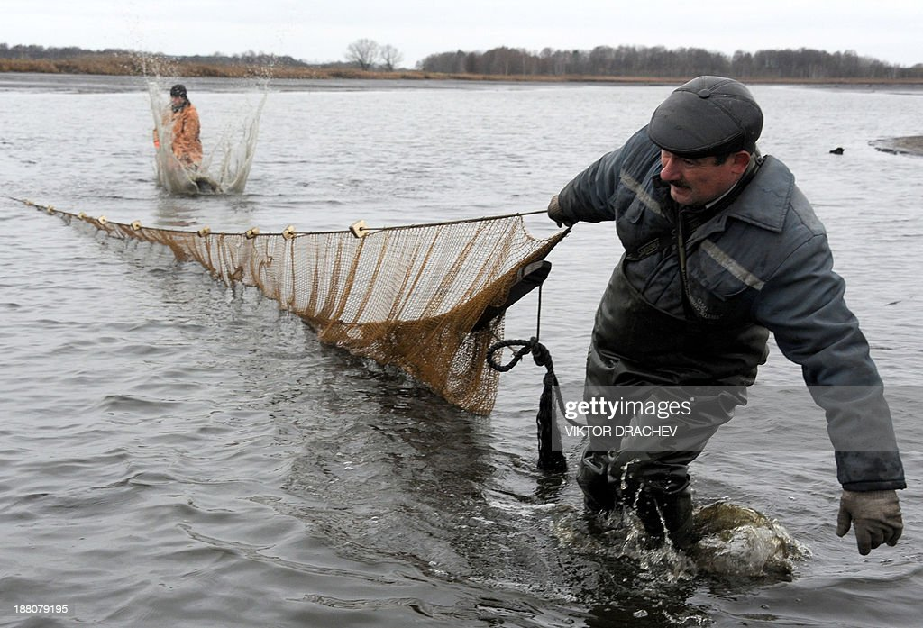 Employees pull in a net to collect fish at a carp breeding farm near the Belarus village of Ozerny, some 60 km south east of the capital Minsk, on November 15, 2013. AFP PHOTO / VIKTOR DRACHEV
