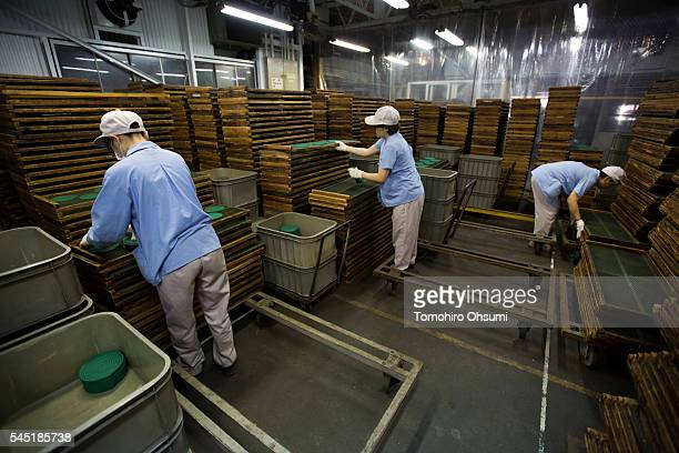 Employees sort mosquito coils at the Kishu Factory of Dainihon Jochugiku Co Ltd on July 6 2016 in Arita Japan Japanese insect repellent manufacturer...