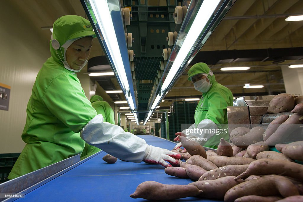 Employees sort sweet potatoes on a conveyor belt at the E-Mart Co. Fresh Center, a sorting facility, in Icheon, South Korea, on Wednesday, Nov. 21, 2012. South Korea's household debt rose to a record in the third quarter as borrowing increased to finance homes and consumption. Photographer: SeongJoon Cho/Bloomberg via Getty Images