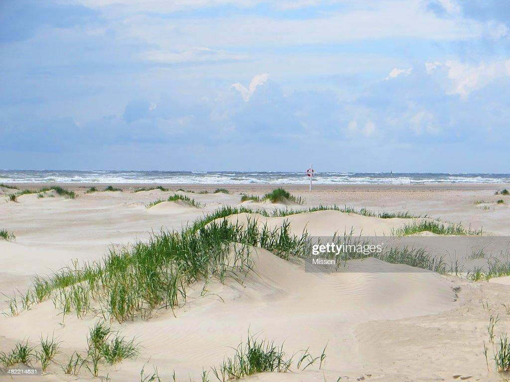 Empty beach with grass : Stock Photo