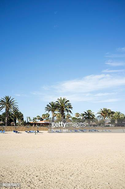 Empty beach with sun loungers and palm trees, Fuerteventura, Spain