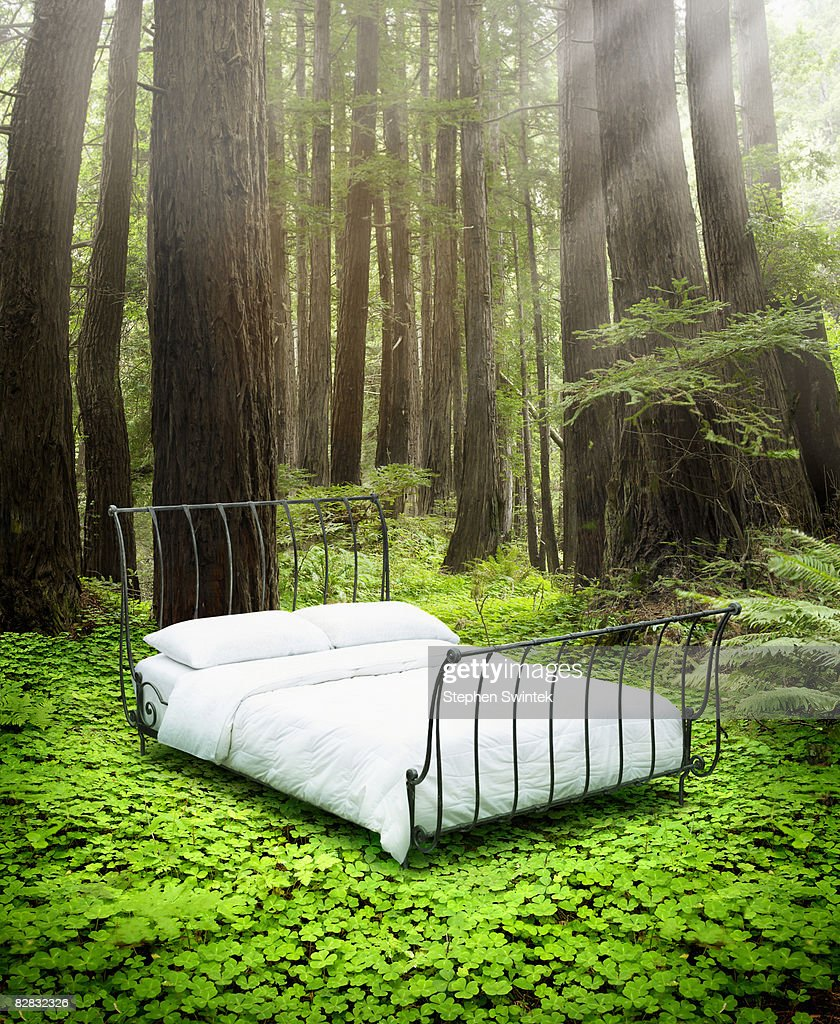 Empty Bed Standing In Bed Of Clovers In A Forest Stock