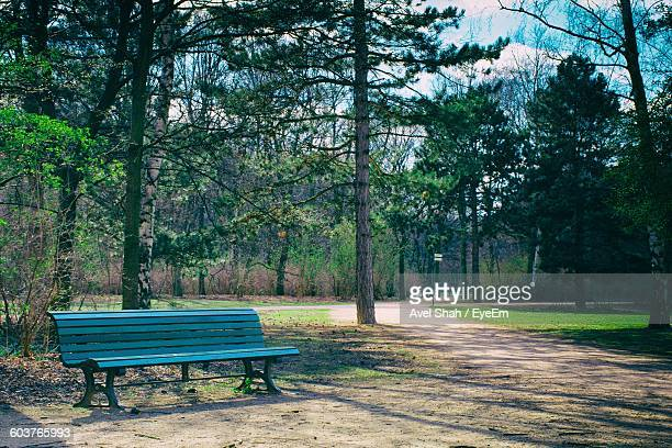 Empty Bench Against Trees In Park