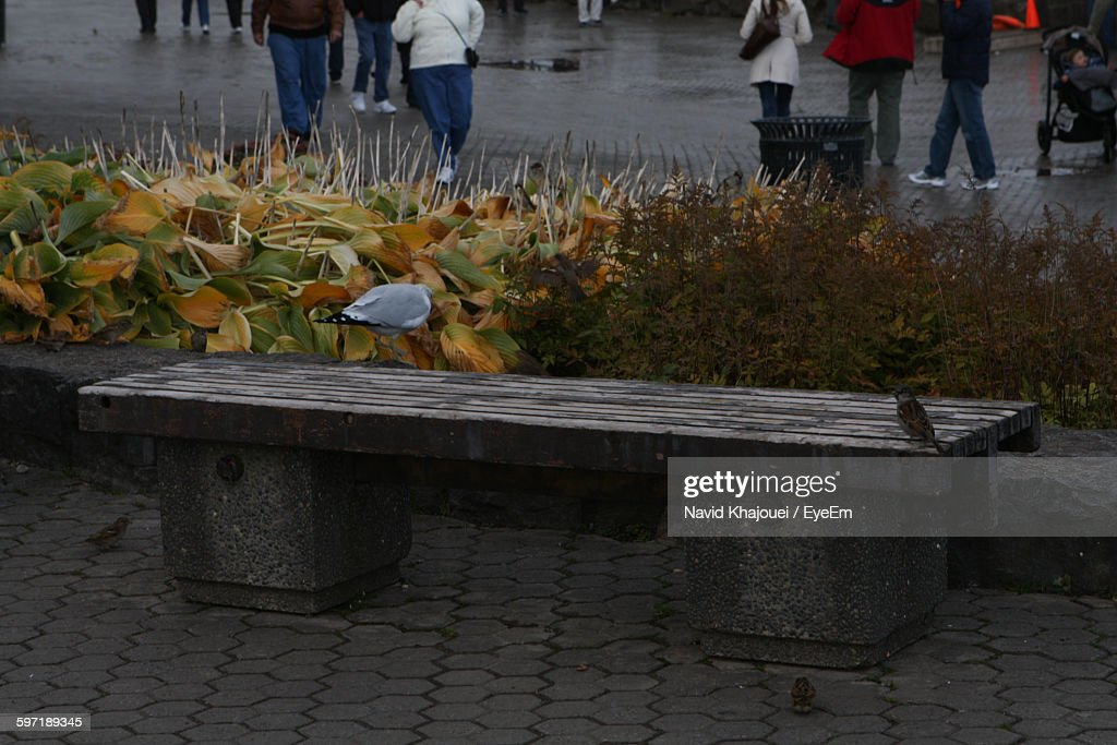 Empty Bench By Plants Against Road