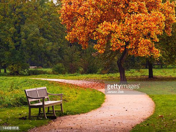 Empty bench in park