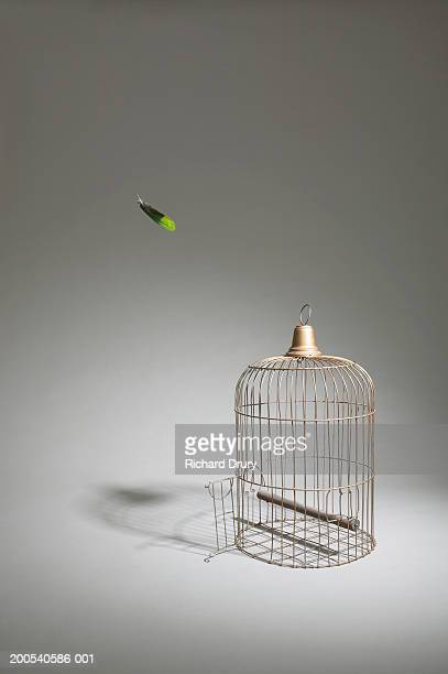 Empty bird cage with parrot feather falling, (digital composite)