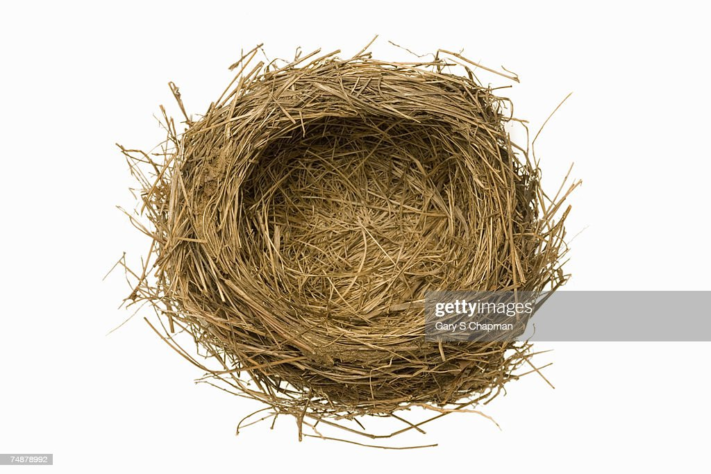 Empty birds nest on white background, close-up. : Stock Photo