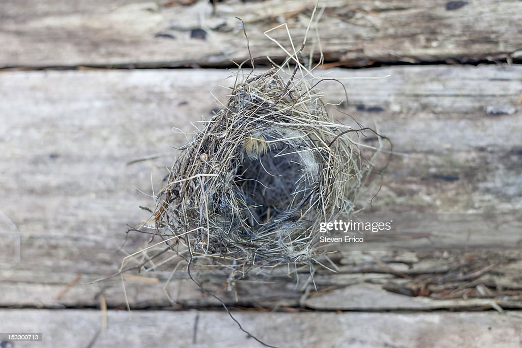 Empty bird's nest : Stock Photo
