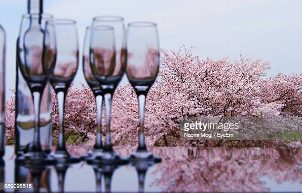 Empty Champagne Flutes And Cherry Blossom