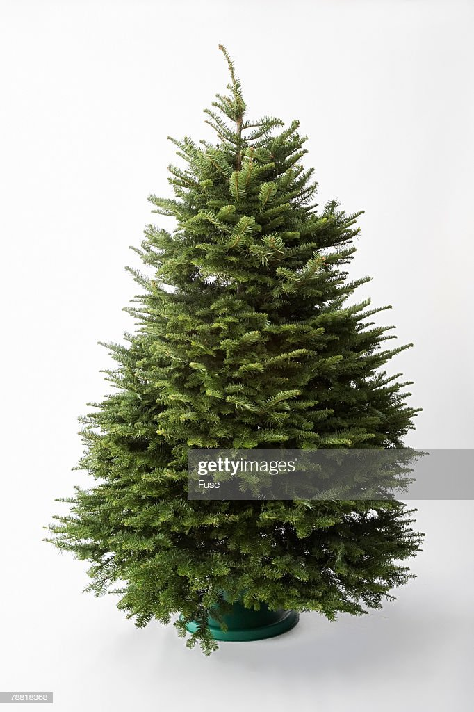 Empty christmas tree stock photo getty images