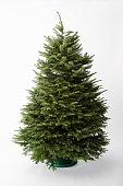 Empty Christmas Tree