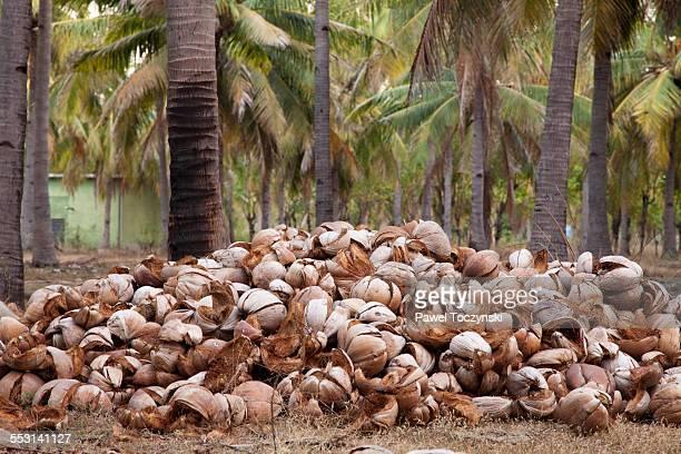 Empty coconut shells, Gili Trawangan