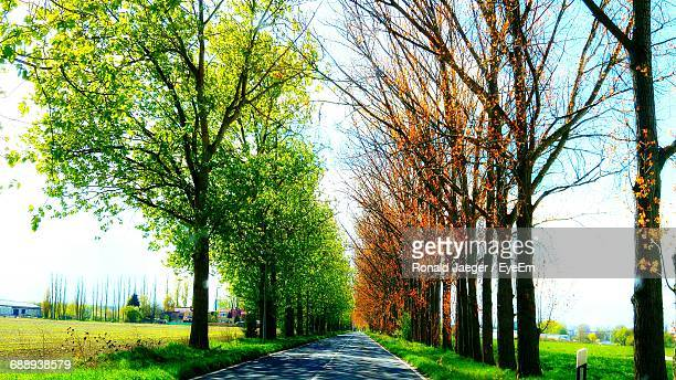 Empty Country Road Along Trees