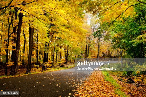 Empty country road with fallen autumn leaves