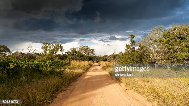 Empty dirt road, Kruger National Park, Mpumalanga, South Africa