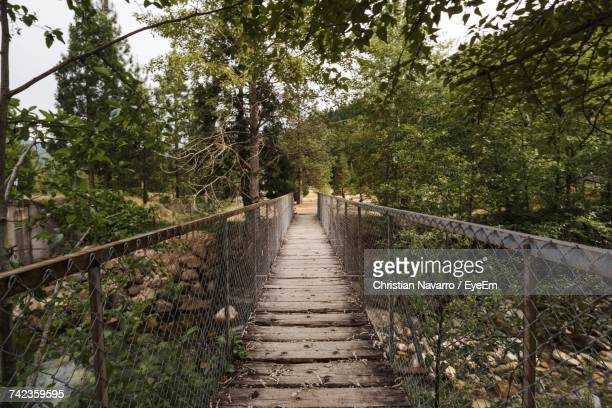 Empty Footbridge Over Stream Amidst Trees In Forest