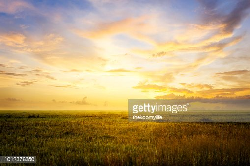 Empty grassland and sky at evening time : Stock Photo