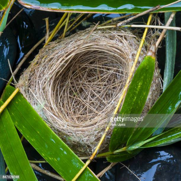 Empty nest of Japanese Yellow Eye bird