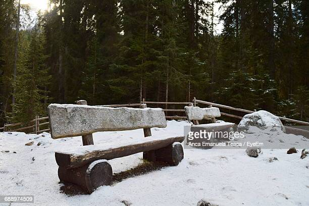 Empty Park Bench In Forest