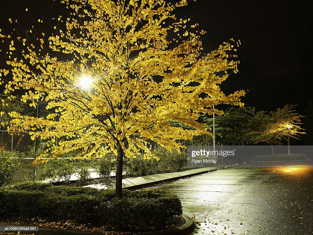 Empty parking lot with autumn tree at night : Stock Photo