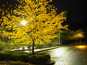 Empty parking lot with autumn tree at night