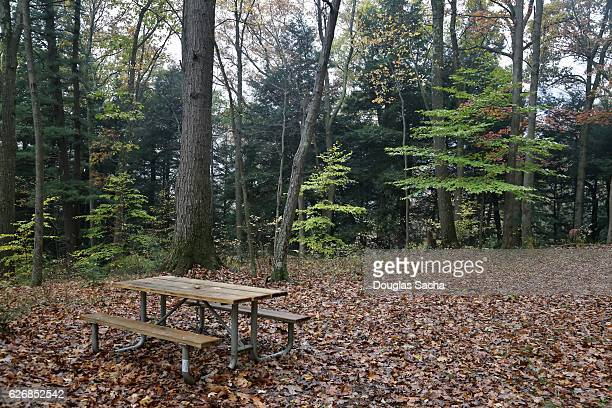 Empty picnic table in a open camp site