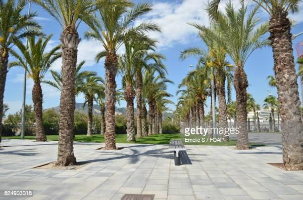 Empty promenade street with palm trees