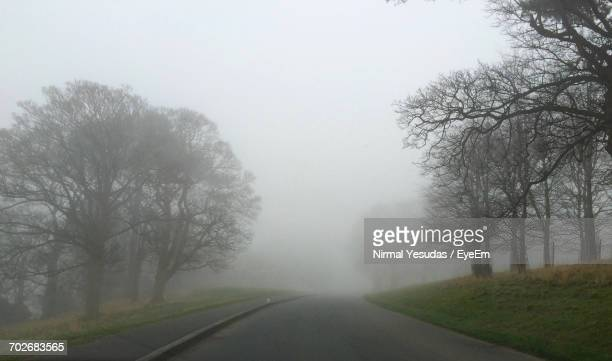 Empty Road Along Bare Trees In Foggy Weather