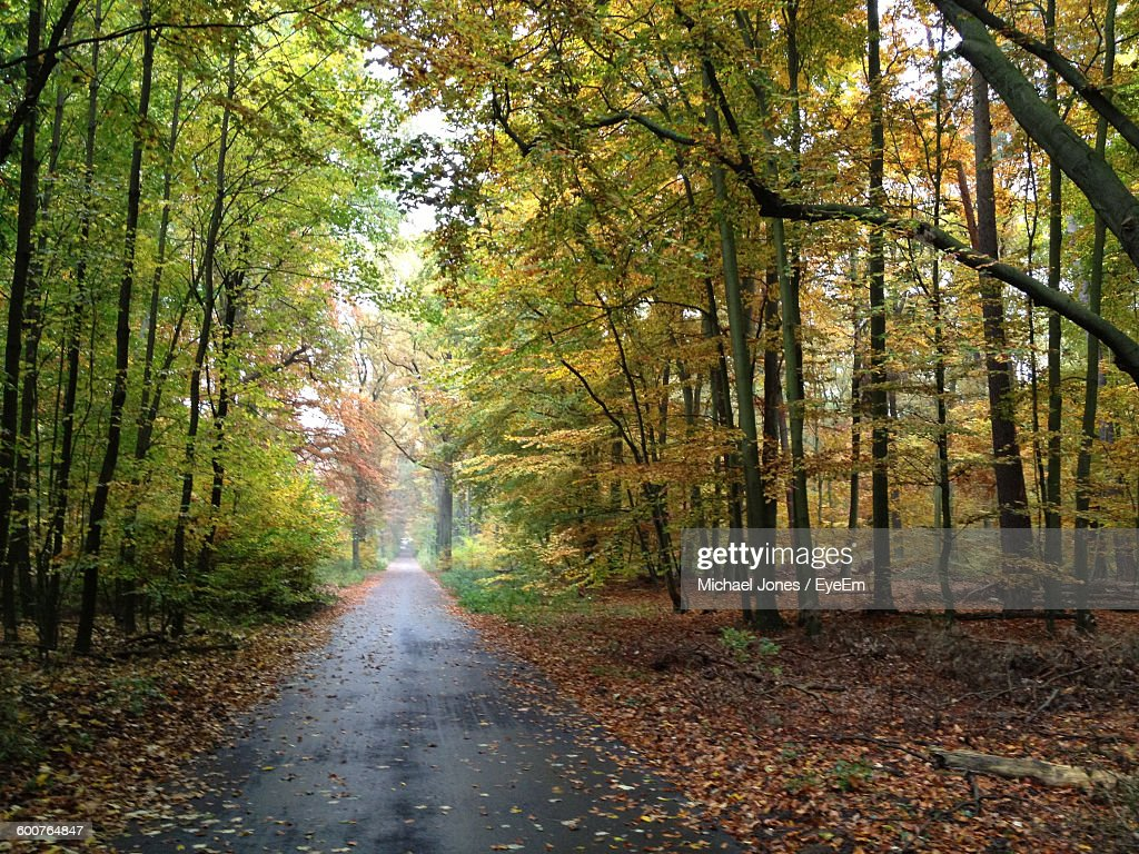 Empty Road Amidst Trees At Forest During Autumn