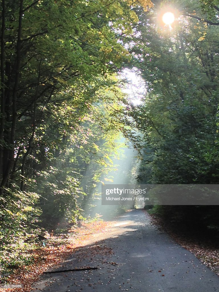 Empty Road Amidst Trees At Forest