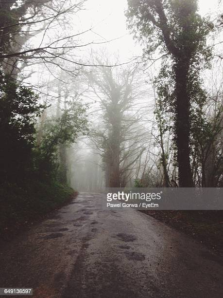 Empty Road Amidst Trees During Foggy Weather