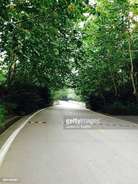 Empty Road Amidst Trees