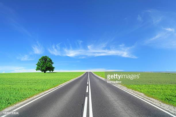 Empty Road - summer landscape